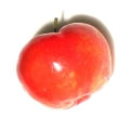 Animal study: acerola inhibits growth of fat tissue