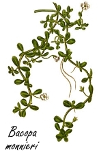 Bacopa monnieri, a natural smart drug for intelligent people