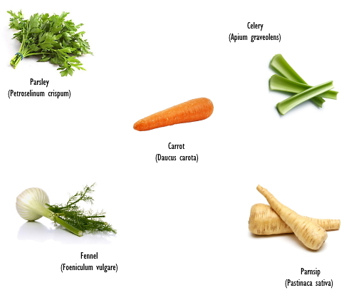 Polyacetylenes, the lesser known cancer inhibitors in carrot, celery and parsnip