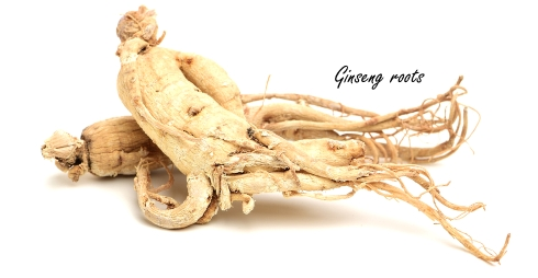 Ginsenoside Rg1, a natural anabolic from the ginseng plant