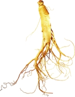How Ginseng boosts athletes' endurance capacity