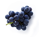 Gallic acid is the anti-cancer agent in Grape Seed Extract